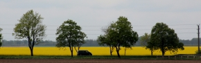 Van, trees and oil seed rape, viewed from a train, Poland; 03-05-14